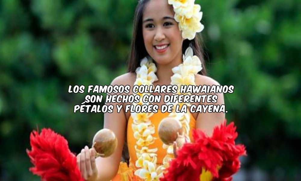 Collares Hawaianos hechos de Cayena