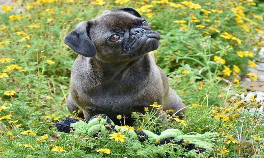 Plantas Comestibles para Perros