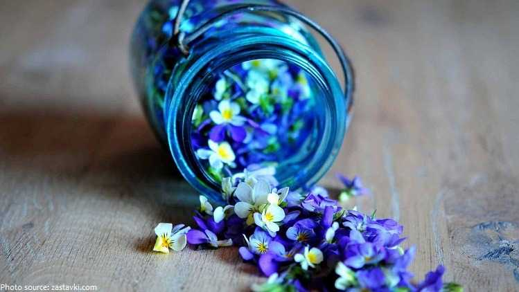 plantas con flores violetas