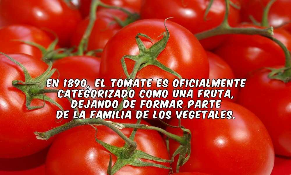 Los tomates en Invernaderos