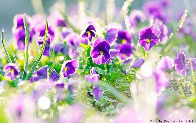 plantas violetas