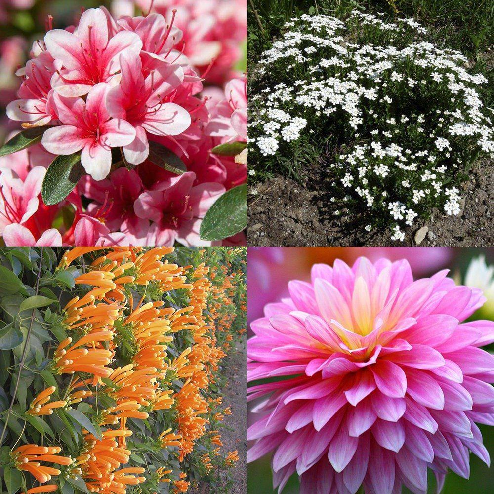 flor y fauna