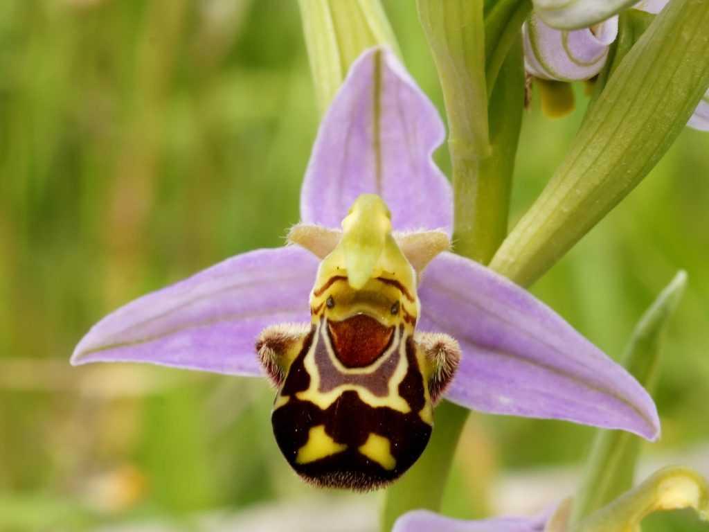 Flor orquídeas