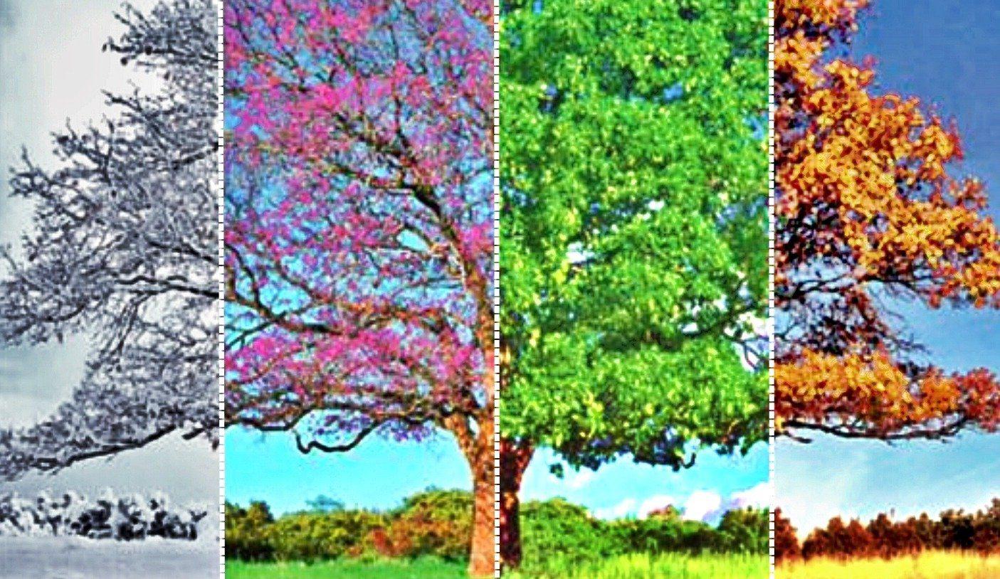 Las estaciones y sus flores