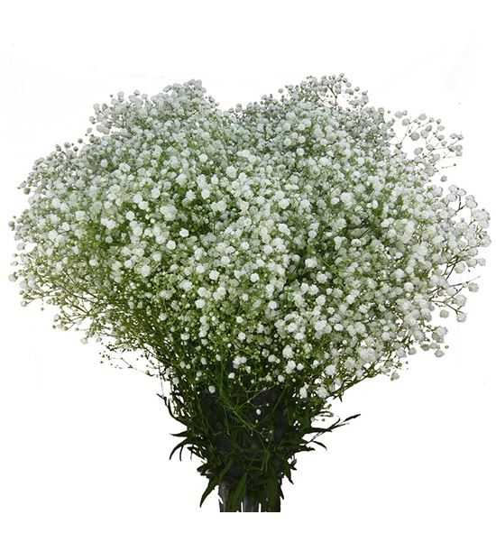 flores de paniculata