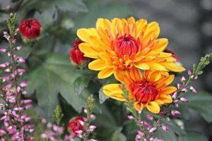 flores jardin
