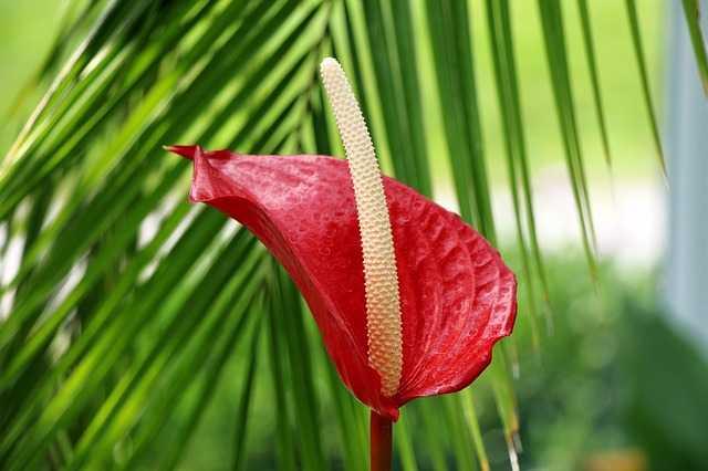 flor de jardin