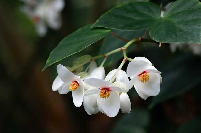 flor jardin