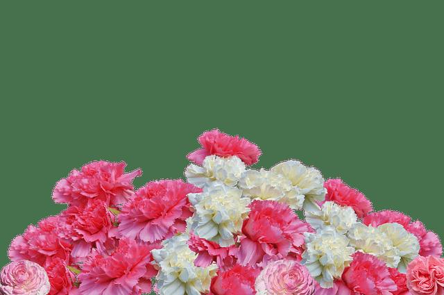 variedad de clavel