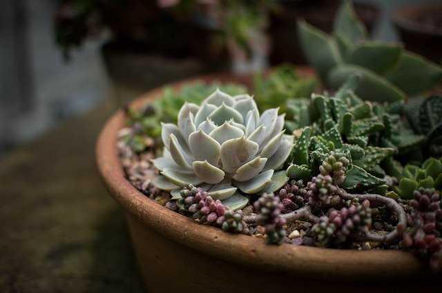 jardin e cactus