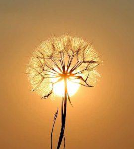 flores secas jardin